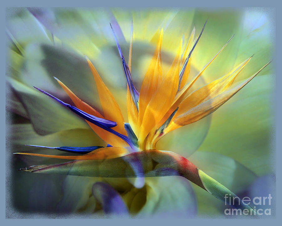 Flower Photograph - Paradise Found by Chuck Brittenham