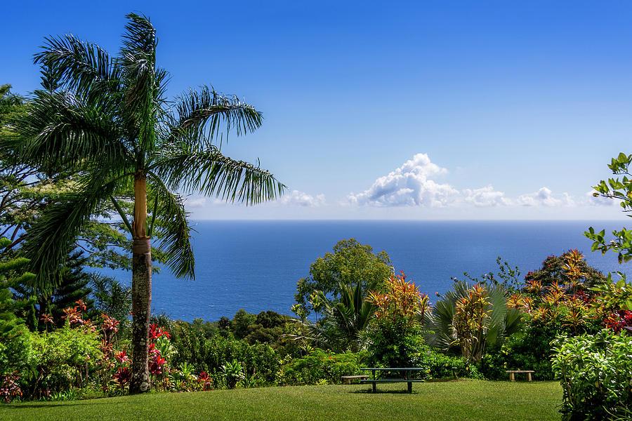 Paradise Picnic by Daniel Murphy