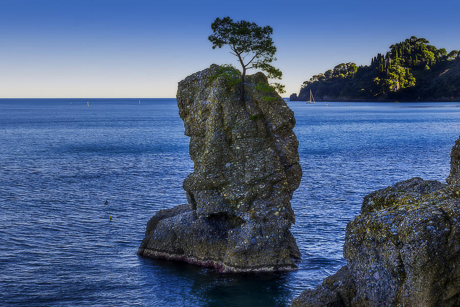 Portofino Photograph - Paraggi Portofino Bay And The Tree On The Rock by Enrico Pelos