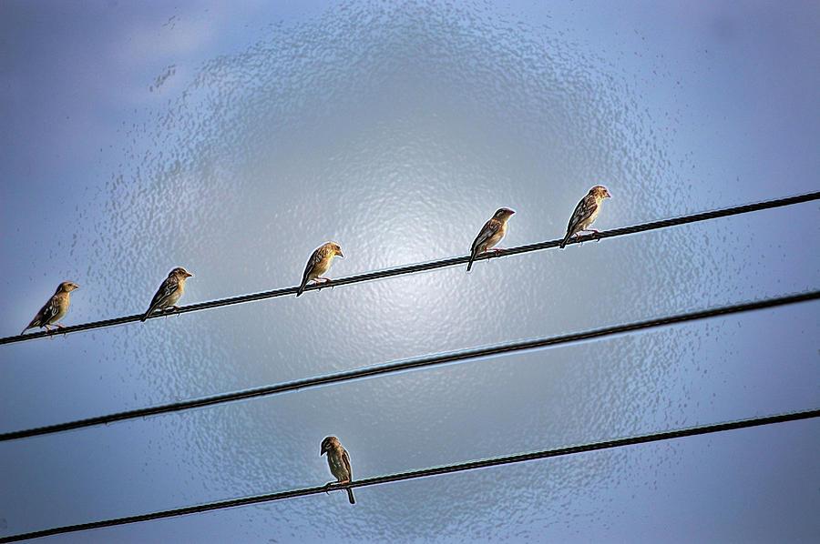 Birds Photograph - Parallel Lines by Farah Faizal