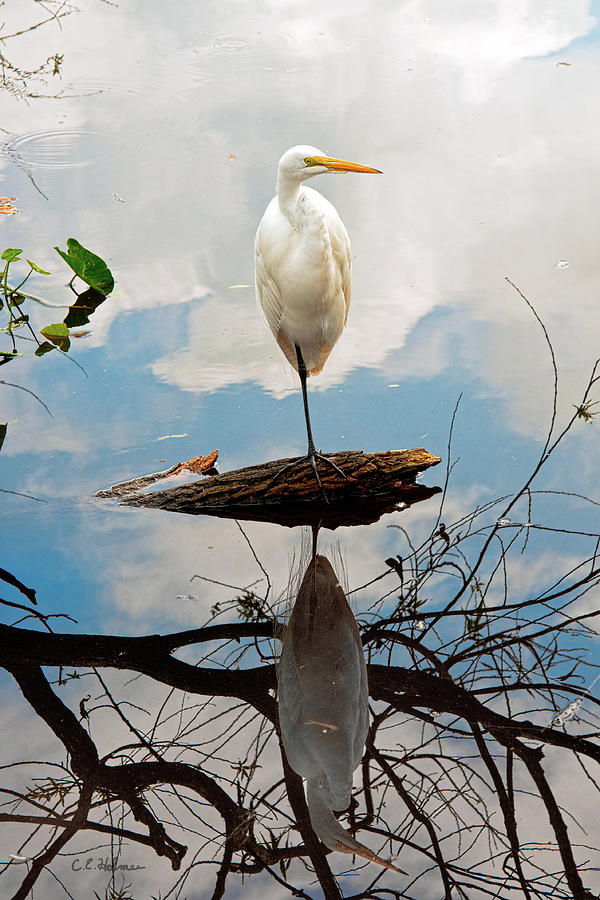 Egret Photograph - Parallel Worlds by Christopher Holmes