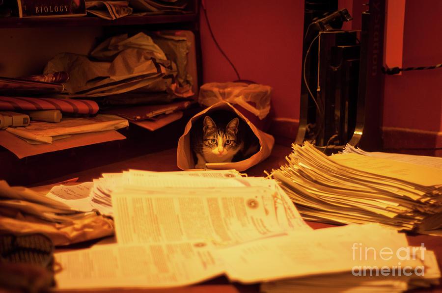 Playful Cat Photograph - Parcel Cat by Venura Herath