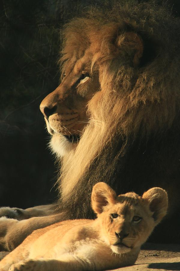 Parents Protection Photograph