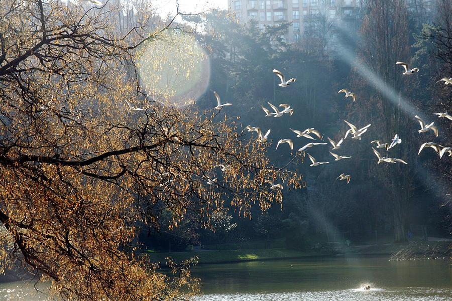 Horizontal Photograph - Paris, Buttes Chaumont by Calinore