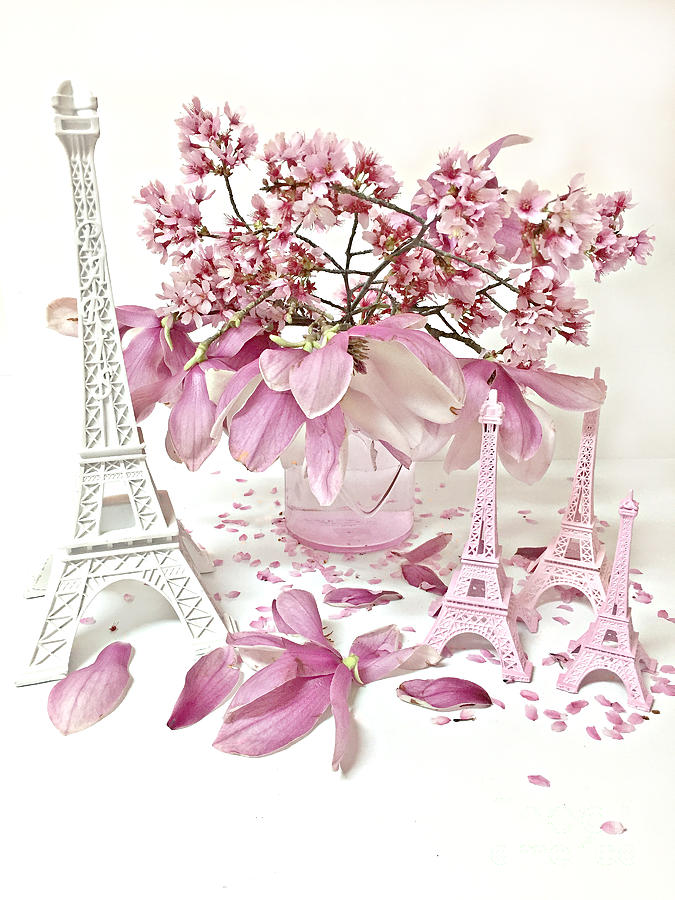 Paris Eiffel Tower Spring Magnolia Flower Blossoms Paris Pink