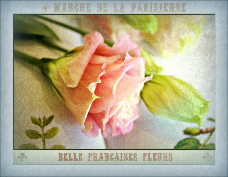 Parisienne Market Photograph