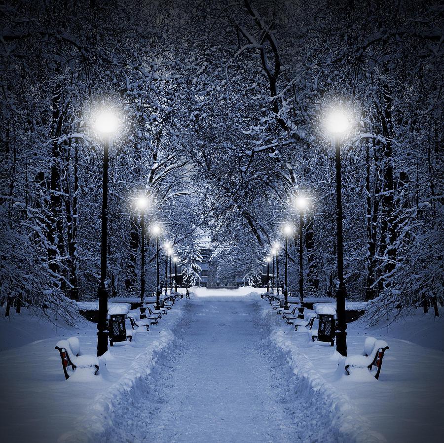 Beautiful Photograph - Park at Christmas by Jaroslaw Grudzinski