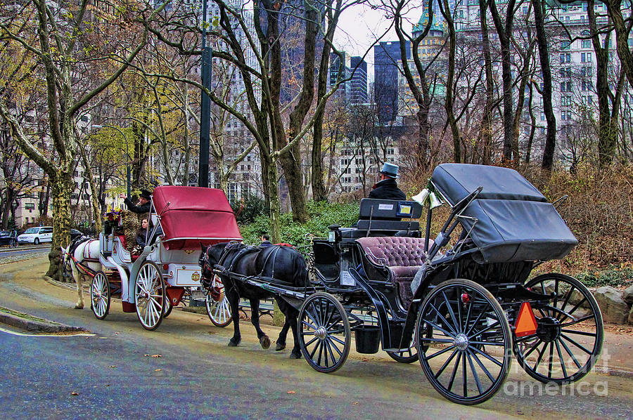 New York Photograph - Park Carriage  by Chuck Kuhn