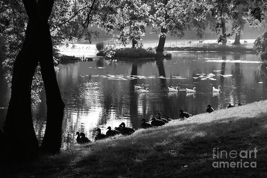 Steenwijk Photograph - Park Life by Alan Harman
