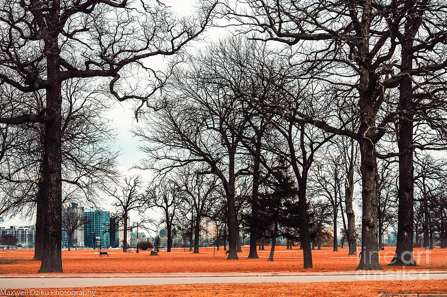 Belle Isle Park View In Detroit Photograph