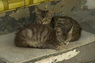 Kittens Photograph - Paros Greece by Catherine Kelly