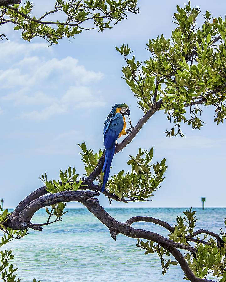 Parrot above the Aqua Sea by Paula Porterfield-Izzo