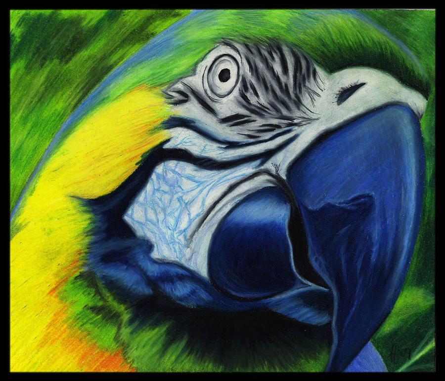 Parrot Drawing - Parrot by Alycia Ryan