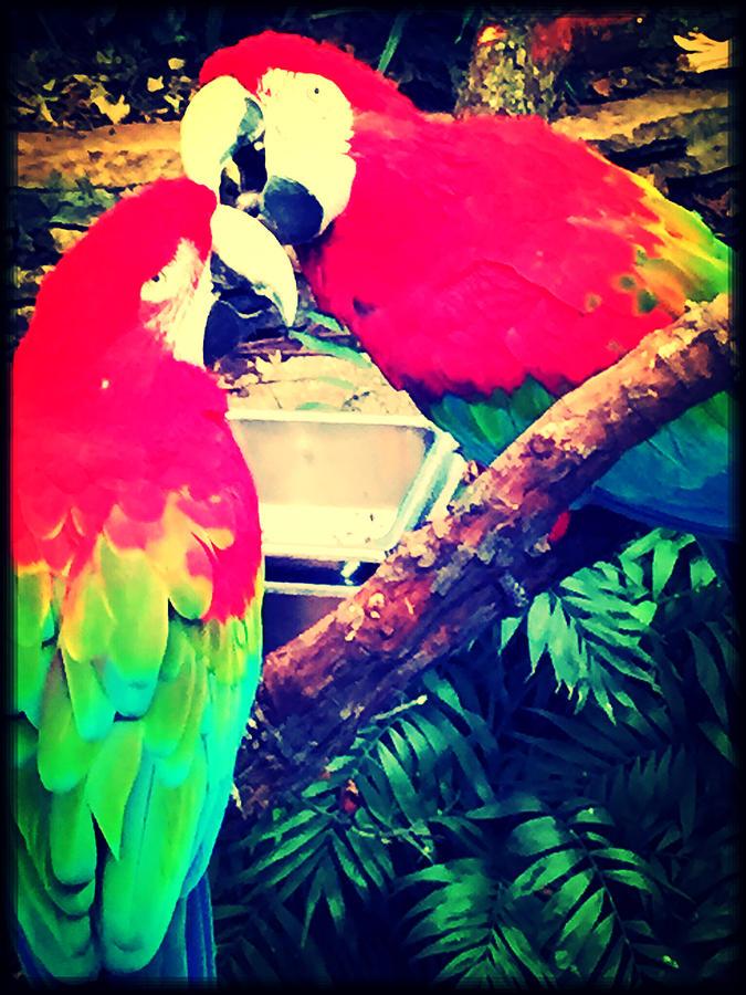 Parrot Photograph - Parrot Couple by April Patterson