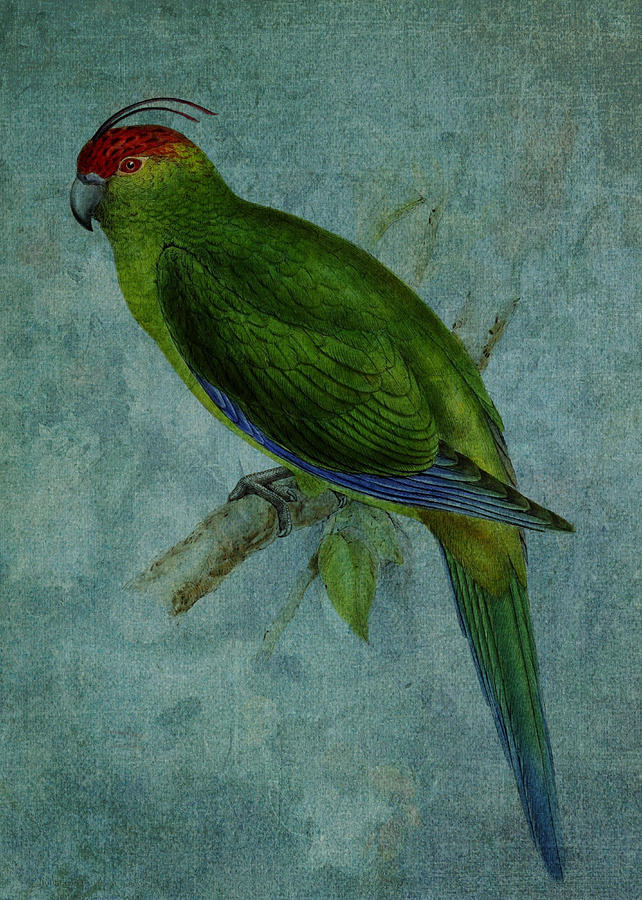 Parrot Digital Art - Parrot Fashion by Sarah Vernon