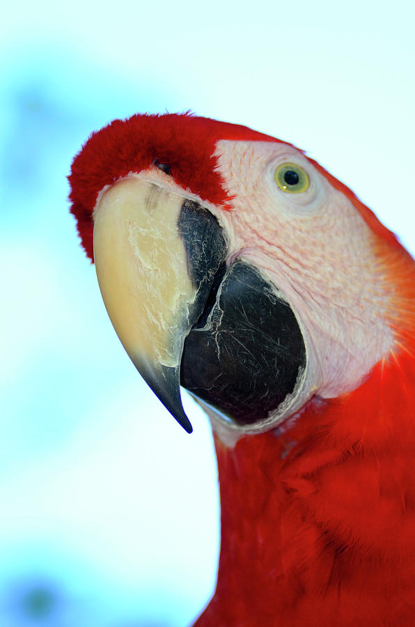 Parrot head, But Not Necessarily A Fan  by Richard Henne