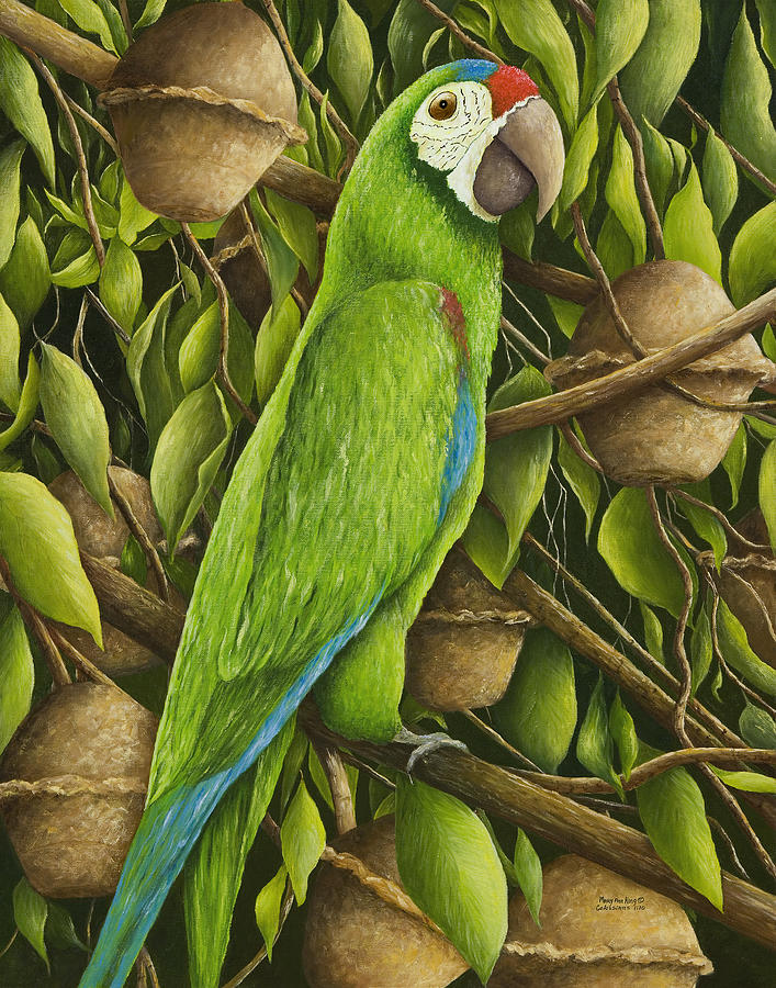 parrot in brazil nut tree painting by mary ann king