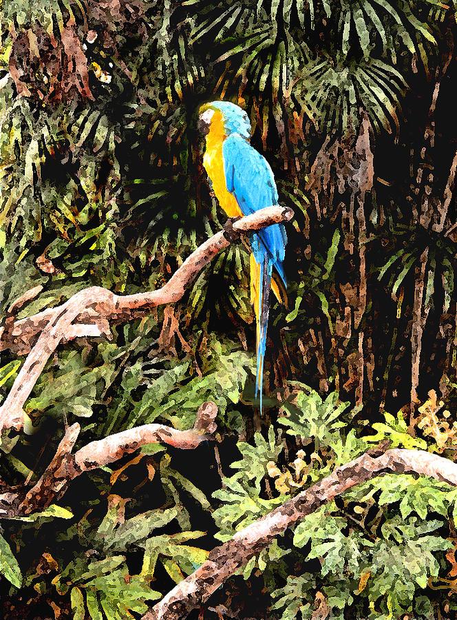 Parrot Photograph - Parrot by Steve Karol