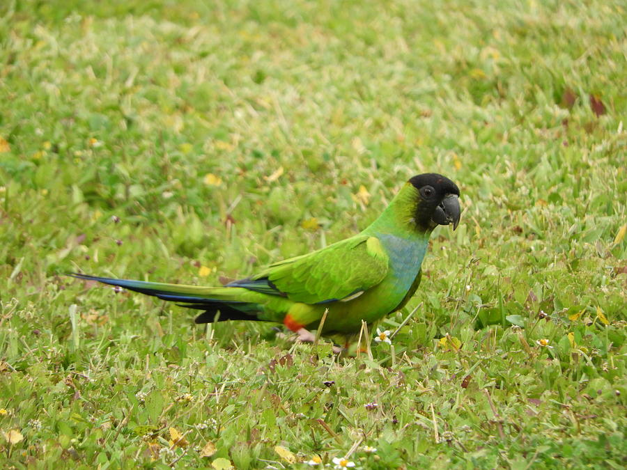 Green Photograph - Parroting Green by Red Cross