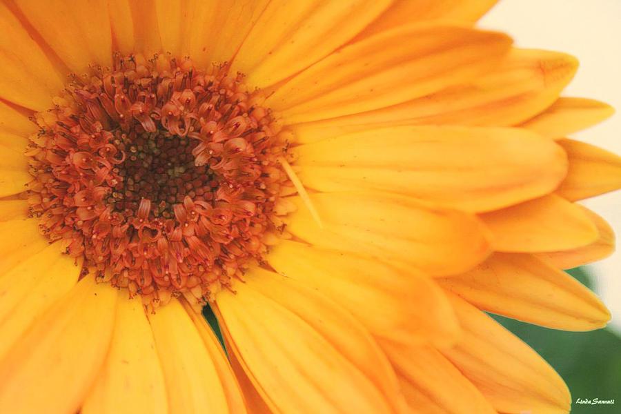 Flowers Photograph - Partly Sunny by Linda Sannuti