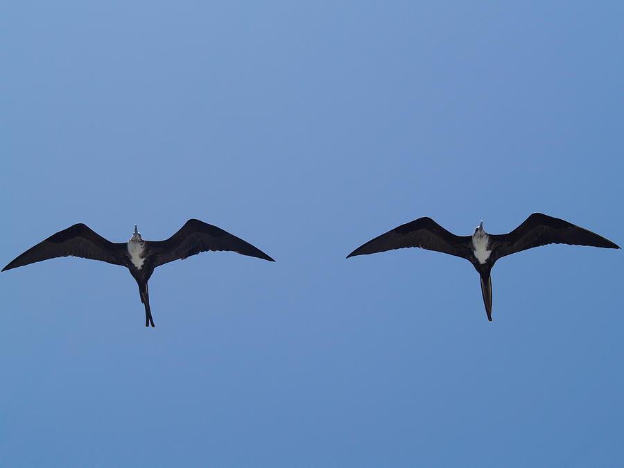 Bird Photograph - Partners In Flight by Richard Mansfield