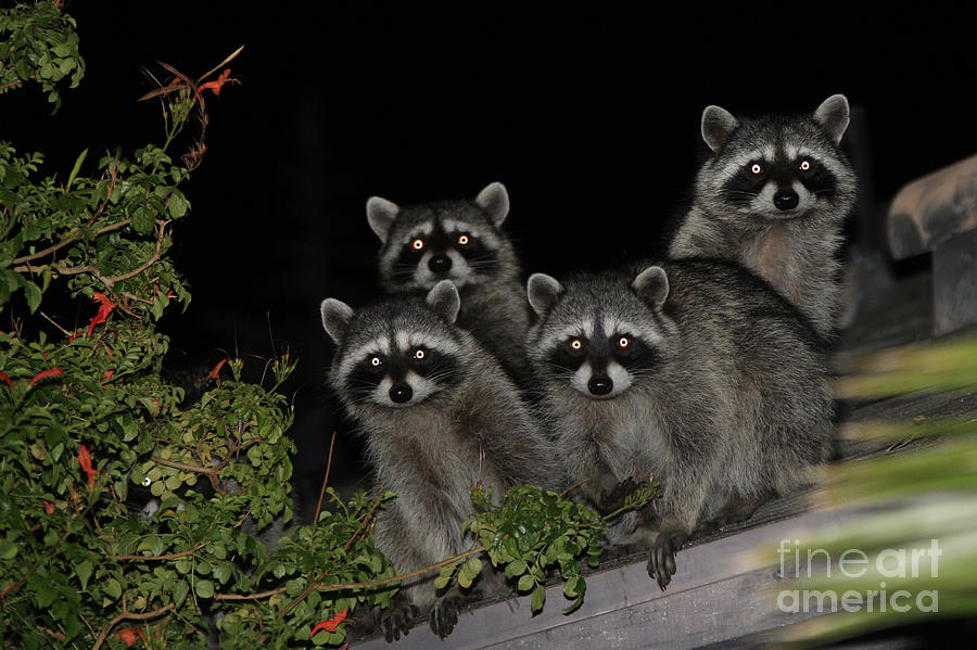Nature Photograph - Party Of Five On The Roof Top by Nina Prommer