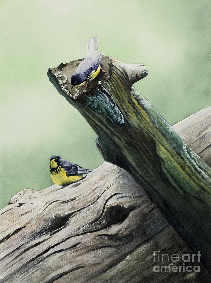 Birds Painting - Parulines Du Canada by Caroline Boyer