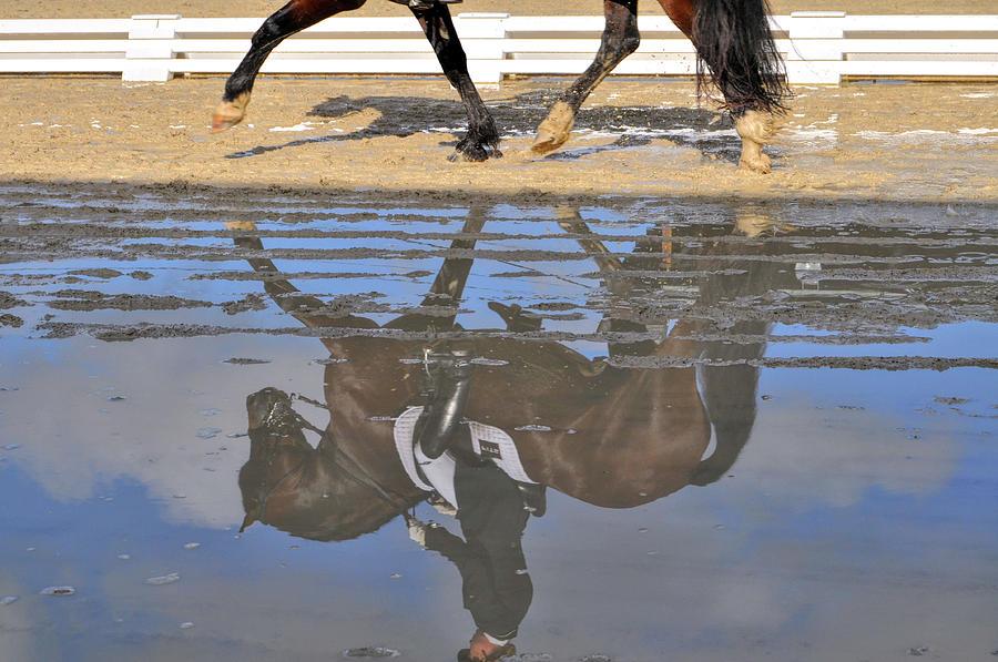 Horse Photograph - Pas De Deux Reflected by JAMART Photography
