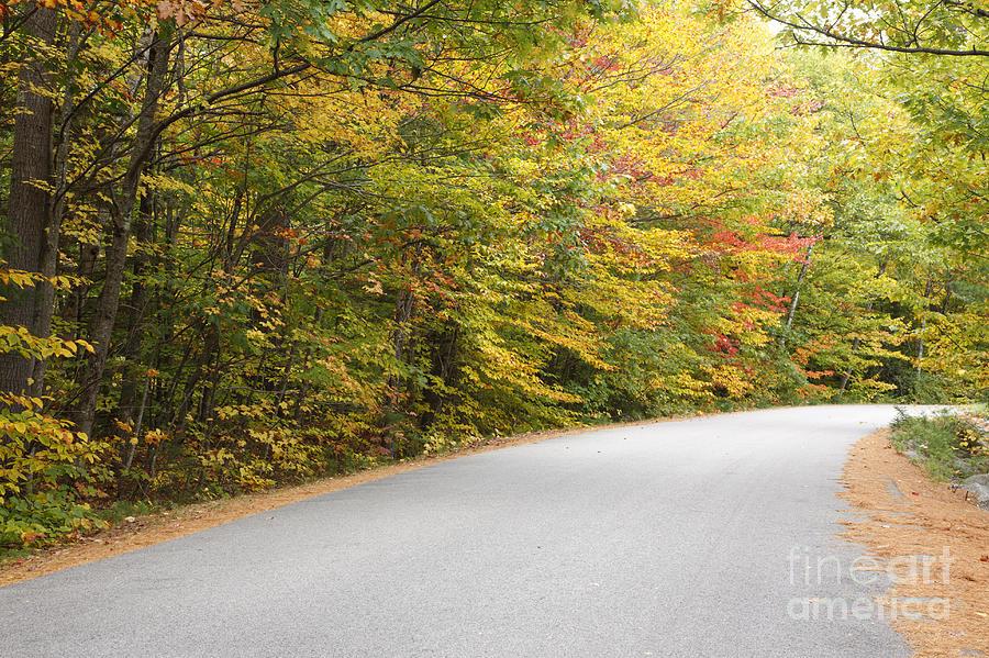 Landscape Photograph - Passaconaway Road - White Mountains New Hampshire Usa by Erin Paul Donovan