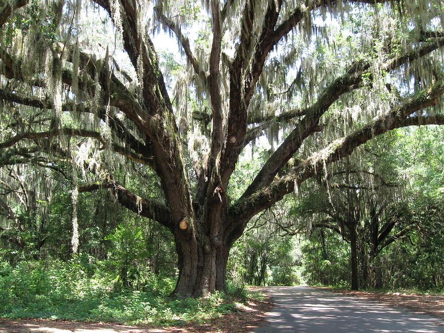 Tree Photograph - Passage Breeze  by Tasha Cooney