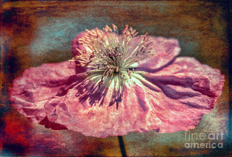 Flower Photograph - Passe Panache by Jean OKeeffe Macro Abundance Art