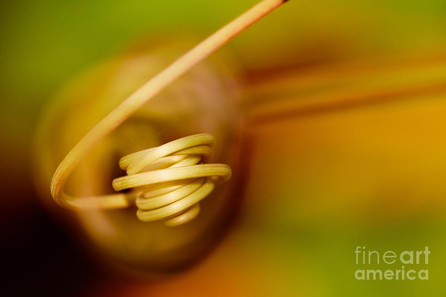 Passiflora Closeup II Photograph