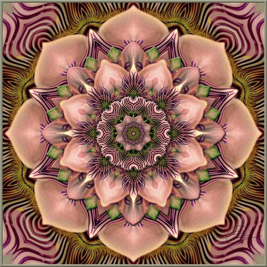 Artist Photograph - Passiflora Indulgence  by Karen Hochman Brown