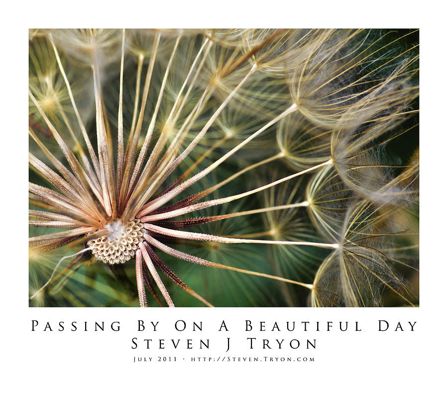 Flowers Photograph - Passing By On A Beautiful Day by Steven Tryon
