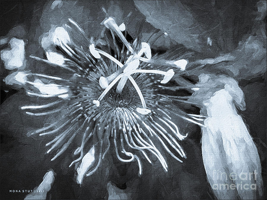 Passion Flower Bw Mixed Media