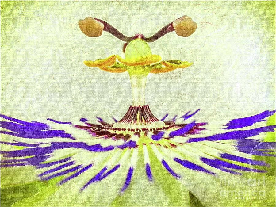 Passion Flower Closeup Digital Art