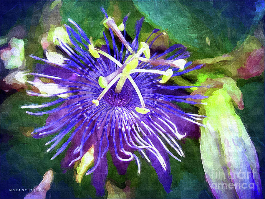 Passion Flower Mixed Media