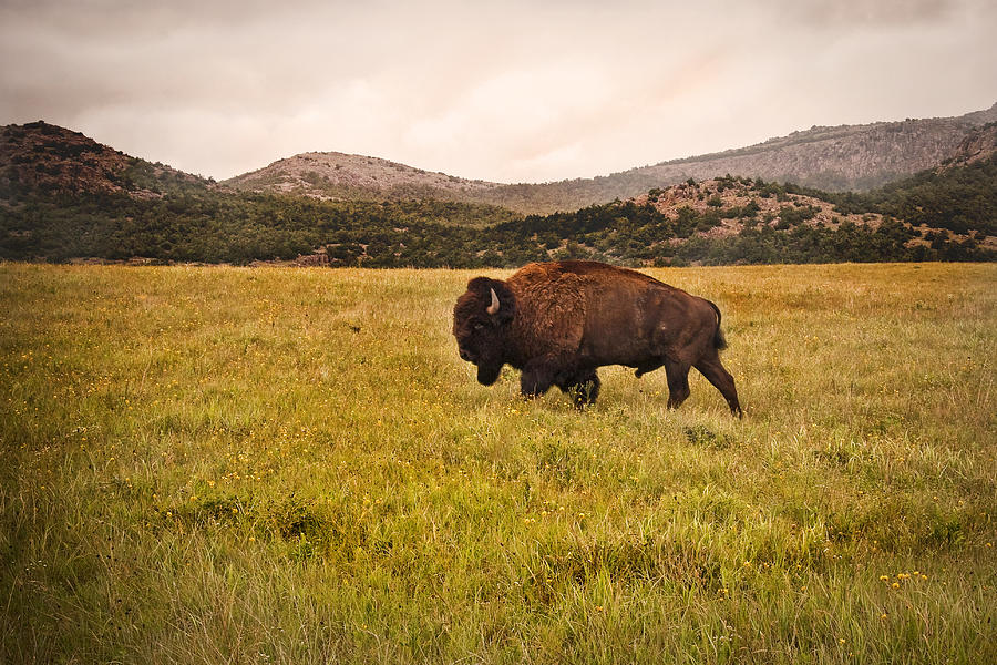 Animal Photograph - Past His Prime by Tamyra Ayles