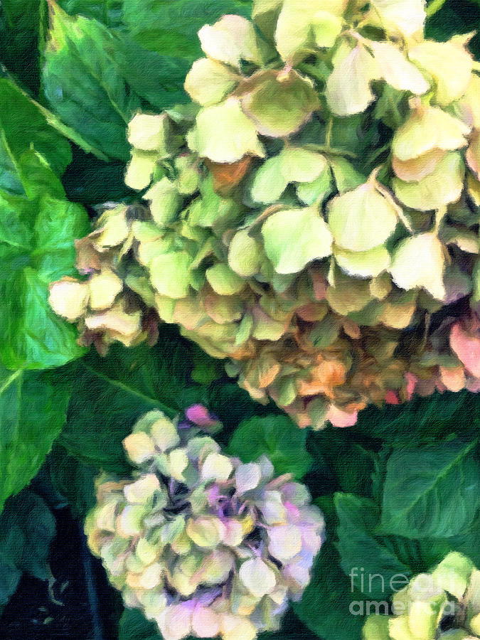 Pastel Lovers - Lounging Summer Hydrangeas by Onedayoneimage Photography