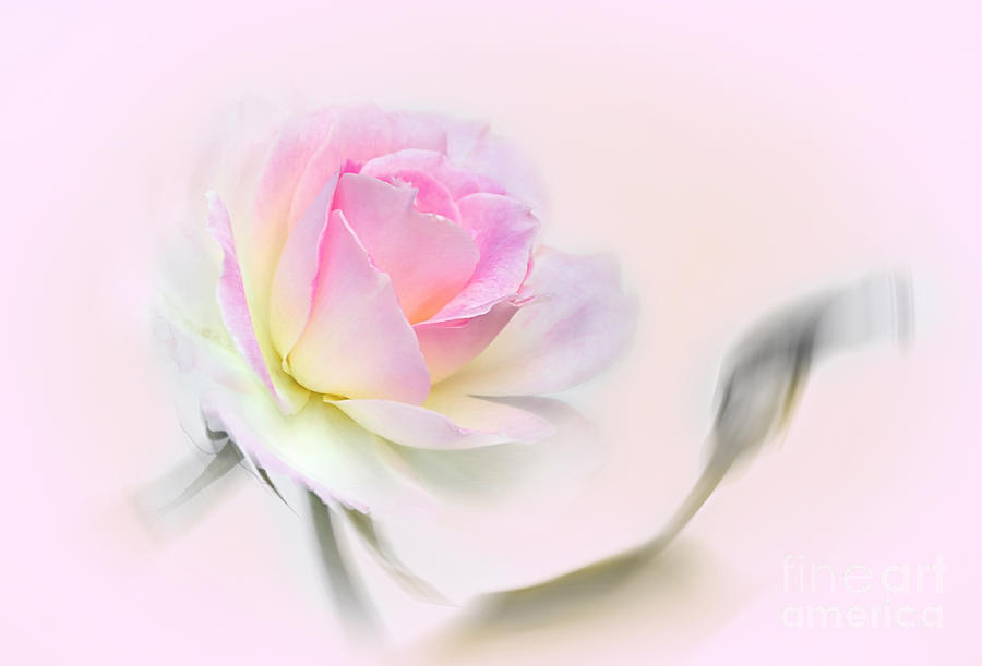Pastel Photograph - Pastel Passion by Kaye Menner