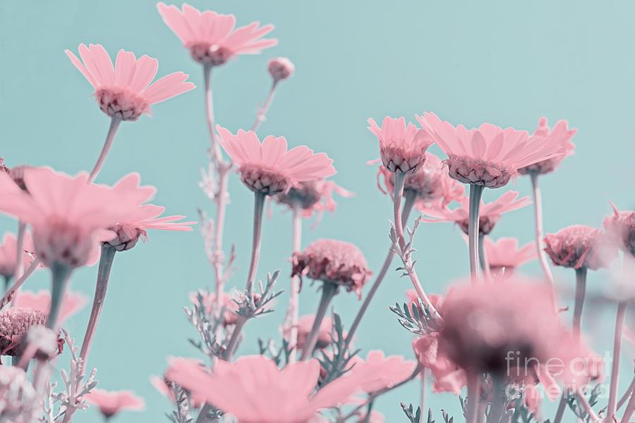 Pastel Pink Flowers Photograph By Kira Yan