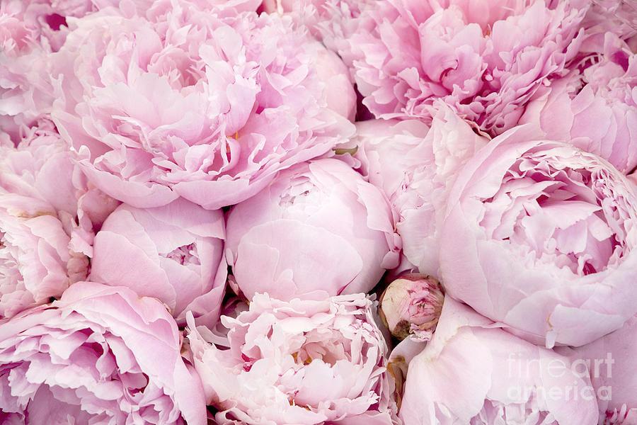Pastel pink peony flowers pink peony decor peonies shabby chic pink peony flowers by kathy fornal peonies photograph pastel pink peony flowers pink peony decor peonies shabby chic mightylinksfo