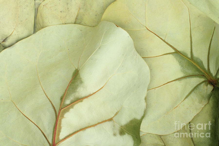 Pastel Poem Photograph by Marilyn Cornwell
