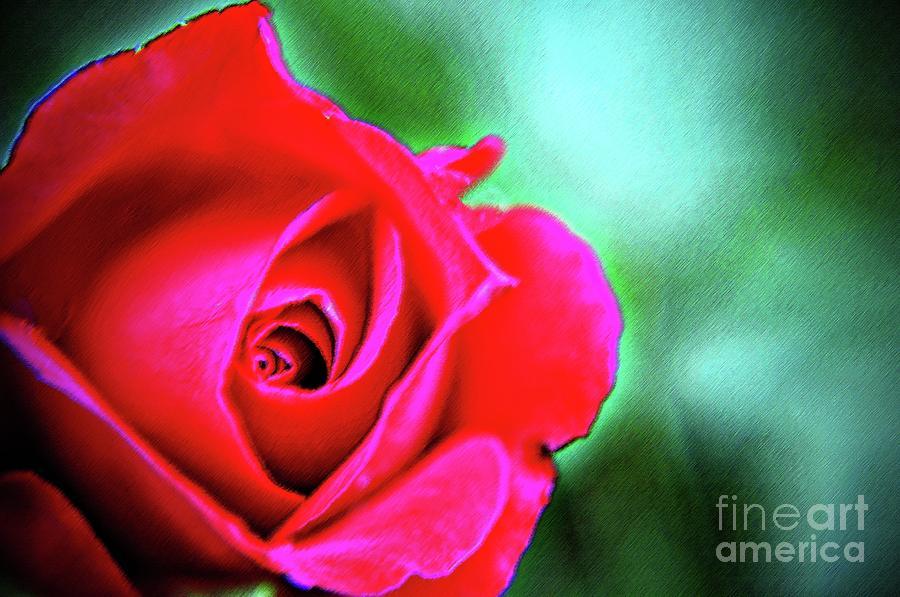 Pastel Rose Pastel