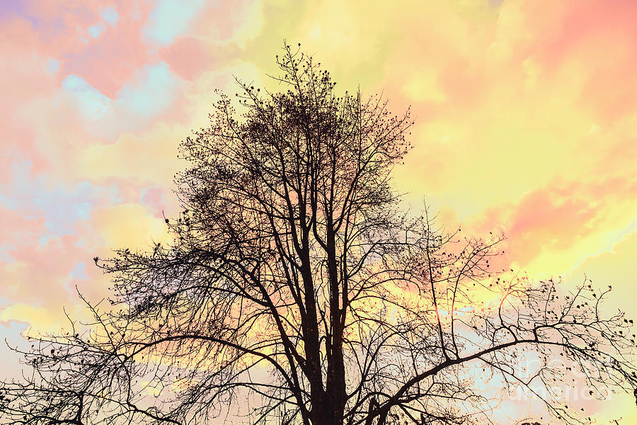 Pastel Tone Tree Silhouette At Sunset Photograph by Jorgo ...