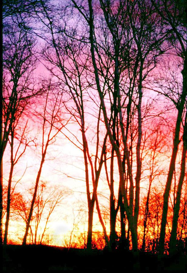 Trees Photograph - Pastel Trees by Michelina Sarao