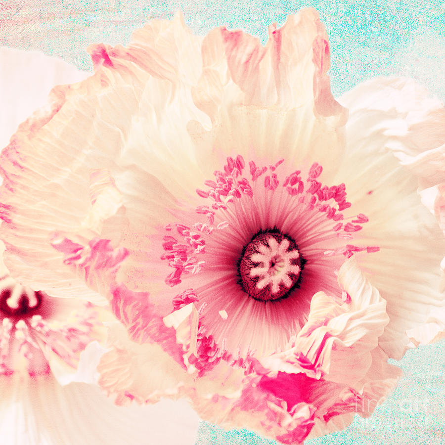 Poppy Photograph - Pastell Poppy by Angela Doelling AD DESIGN Photo and PhotoArt