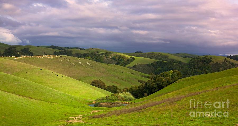 Hills Photograph - Pastoral California Hillside by Matt Tilghman