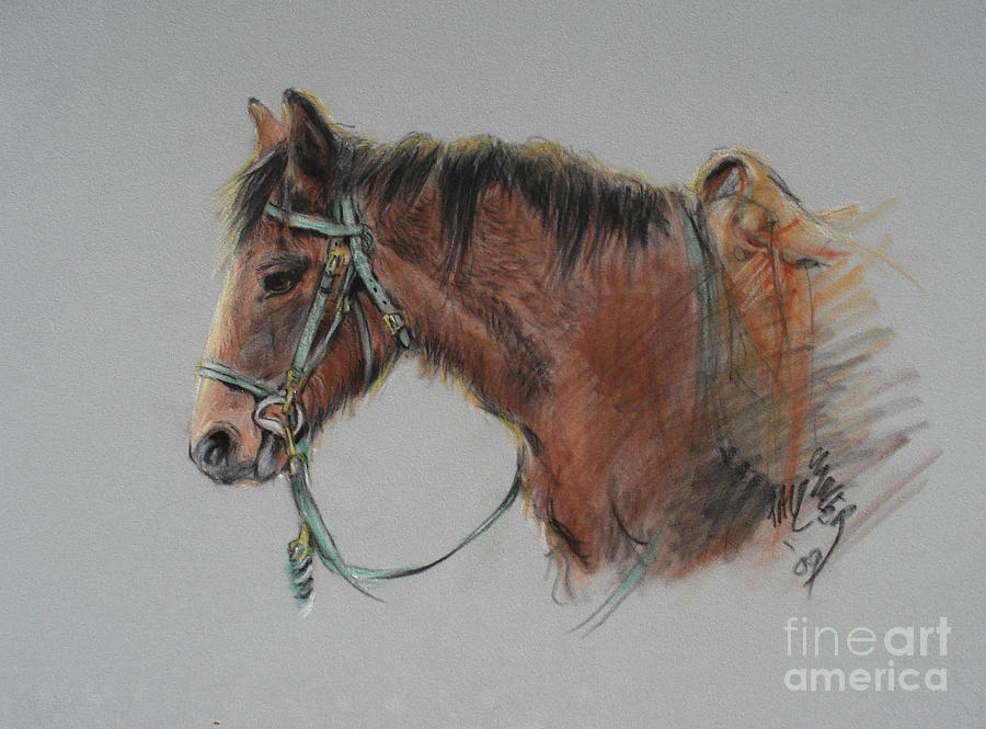 Horse Painting - Pat Winter At The Morgan Horse Ranch Prns by Paul Miller