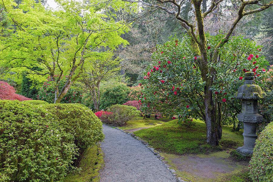 Japanese Garden Photograph - Path at Japanese Garden by David Gn